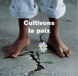 Paix : Outils et organisation  paix-paix-paix-300x290